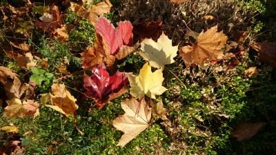 Un tapis de feuilles, l'odeur du bois dans la cheminée